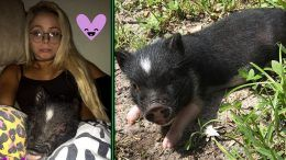 liv morgan pig missing nxt