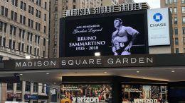 madison square garden bruno sammartino tribute
