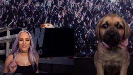 aew puppy battle royale video youtube